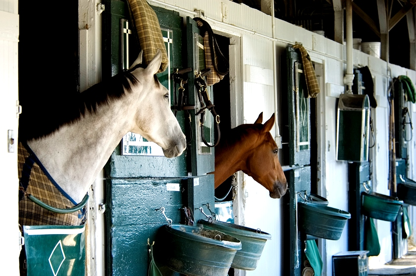 Horses in Stable Kentucky Ophthalmology Job OjO Ophthalmology jobs Online KY MD needed2